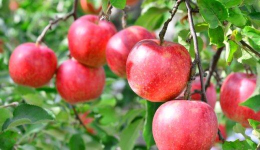 りんごが健康に良いと言われる理由は?その効果を書き出してみる