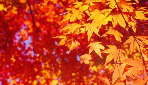 吉野山の紅葉デートに行こう!色づき始める見頃な時期はいつくらい?